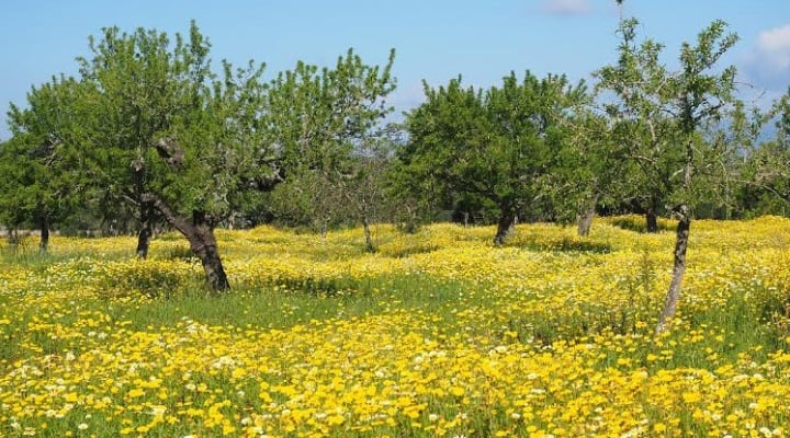 olive trees in southern Spain - article about Allison's Spanish Paleo experiences and finding gluten free in Spanish supermarkets.